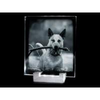Ensemble support lumineux et Moyenne plaque photo en verticale.